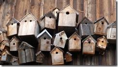 bird-feeder-248946_640